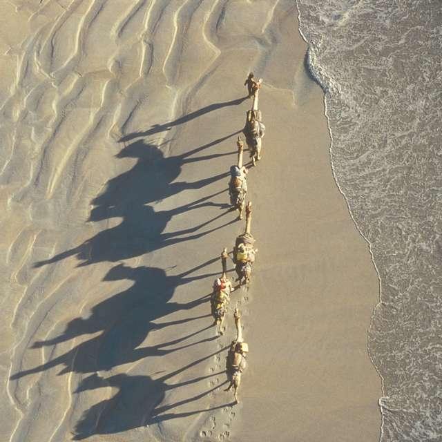 Chameaux à Broome - Voyage en Australie