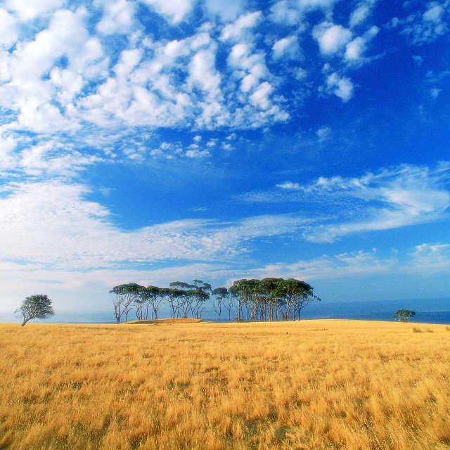 Kangaroo island - Paquete de viaje Australia Down Under