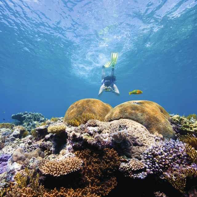 Snorkeling en la Gran Barrera de Coral