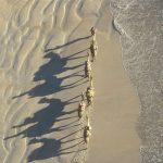 Camellos, playa de Broome - Viaje Colores de Australia