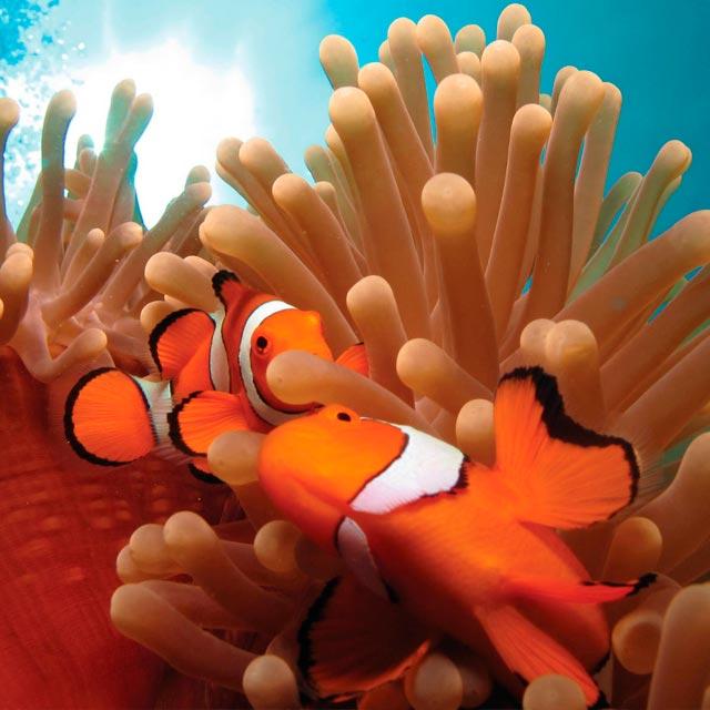 Peces en la Gran Barrera de Coral - Romántica Australia
