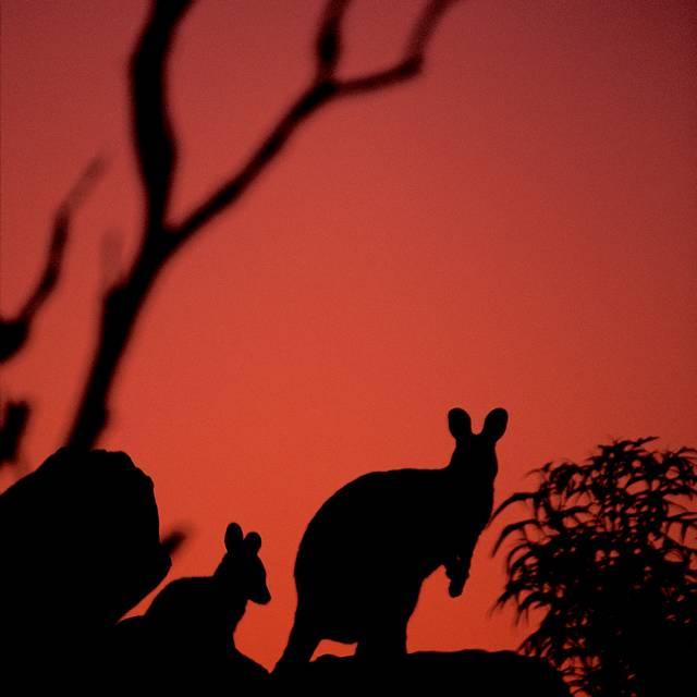 viaje a Australia y Nueva Zelanda